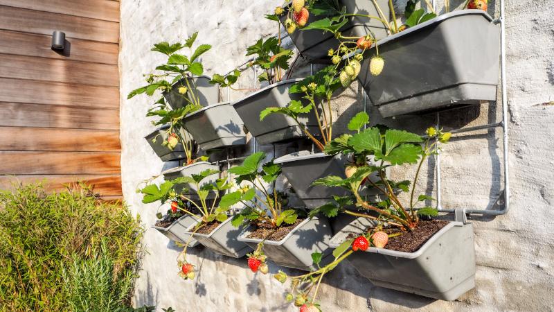 Vertical Gardening mit Blumenkästen