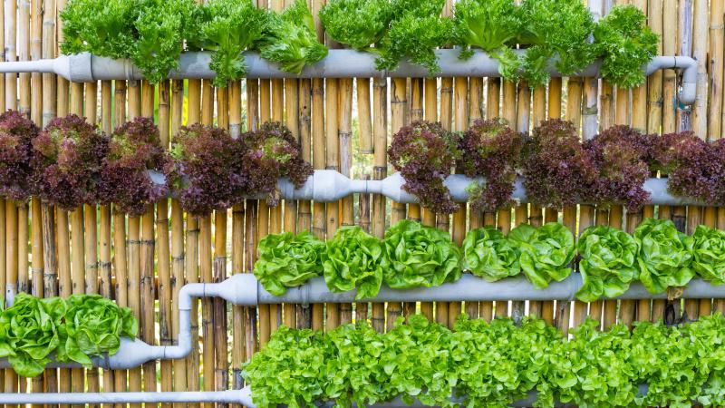 Vertical Gardening mit PVC-Rohren