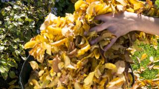 Herbstlaub im Garten aufsammeln