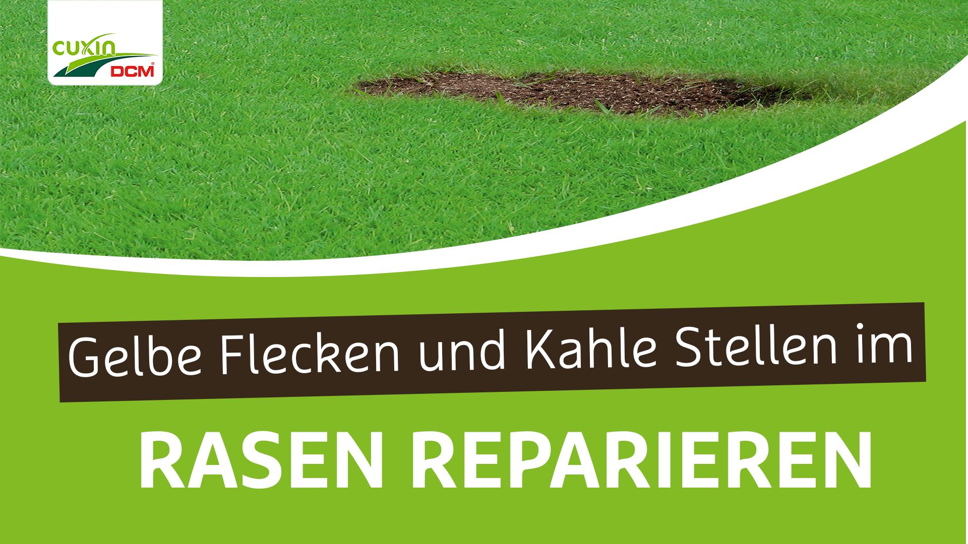 Gelbe Flecken und kahle Stellen im Rasen reparieren