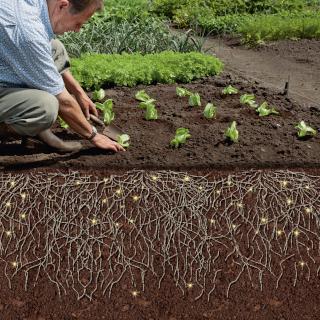 Wurzelaktivator & Gemüse anpflanzen
