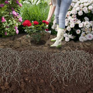Wurzelaktivator & Zierpflanzen pflanzen