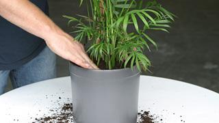 Planten in potten op het terras dcm