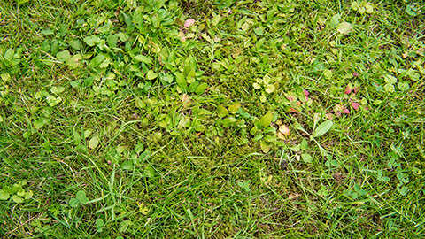 Puis-je lutter contre la mousse et les mauvaises herbes dans ma pelouse et fertiliser celle-ci par la même occasion ?