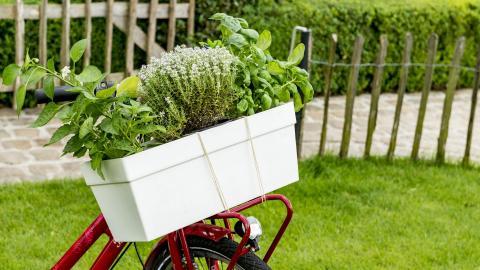 Cultiver vous-même vos plantes aromatiques