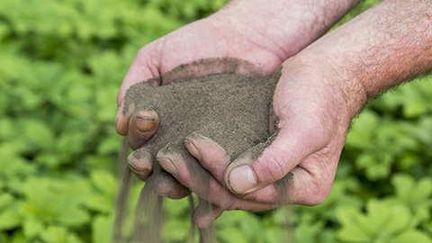Déterminez le type du sol de votre jardin
