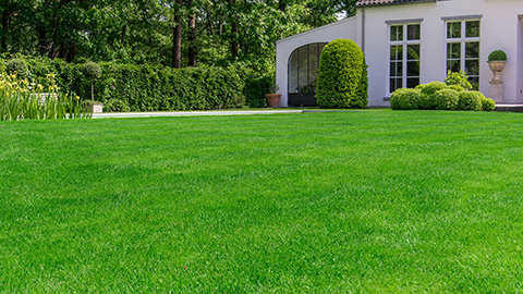 Een prachtig Engels siergazon in jouw tuin is gemakkelijk mogelijk