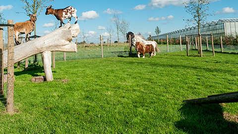 Het juiste graszaad voor een weide of gazon met geiten, schapen, eenden, konijnen, cavia's of paarden
