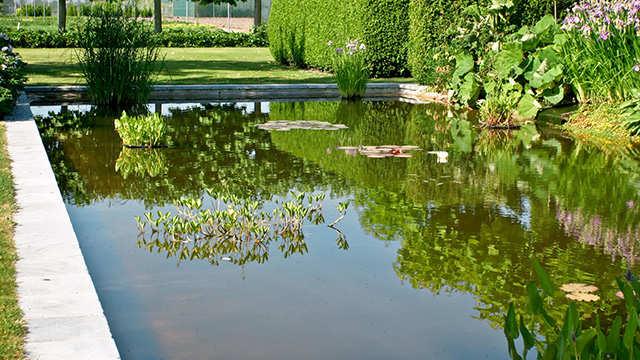 Une bonne qualité de l'eau, la base pour un étang sain