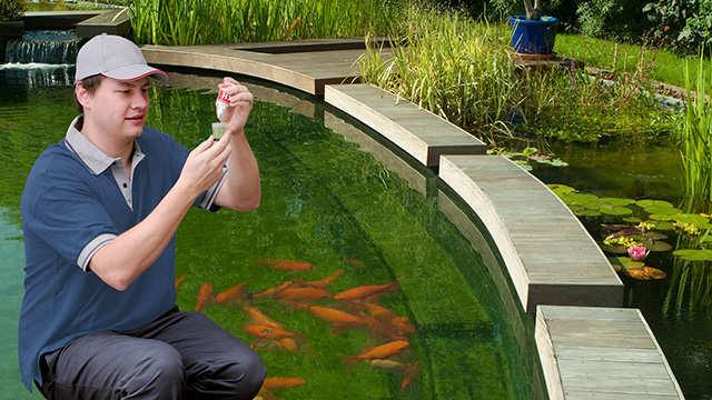 L'entretien des étangs