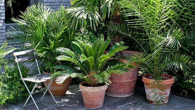 Palmen voor binnen en buiten