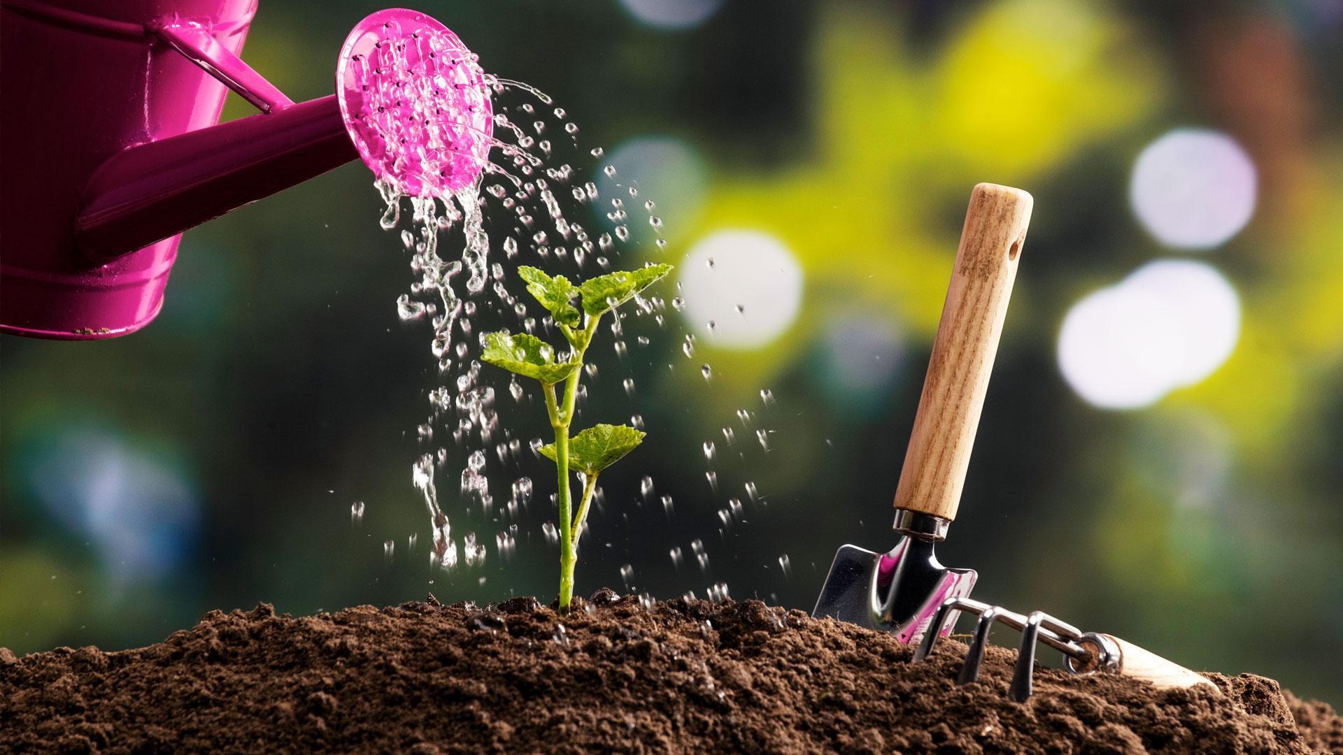 DCM Garden: tuinieren op maat van je tuin!