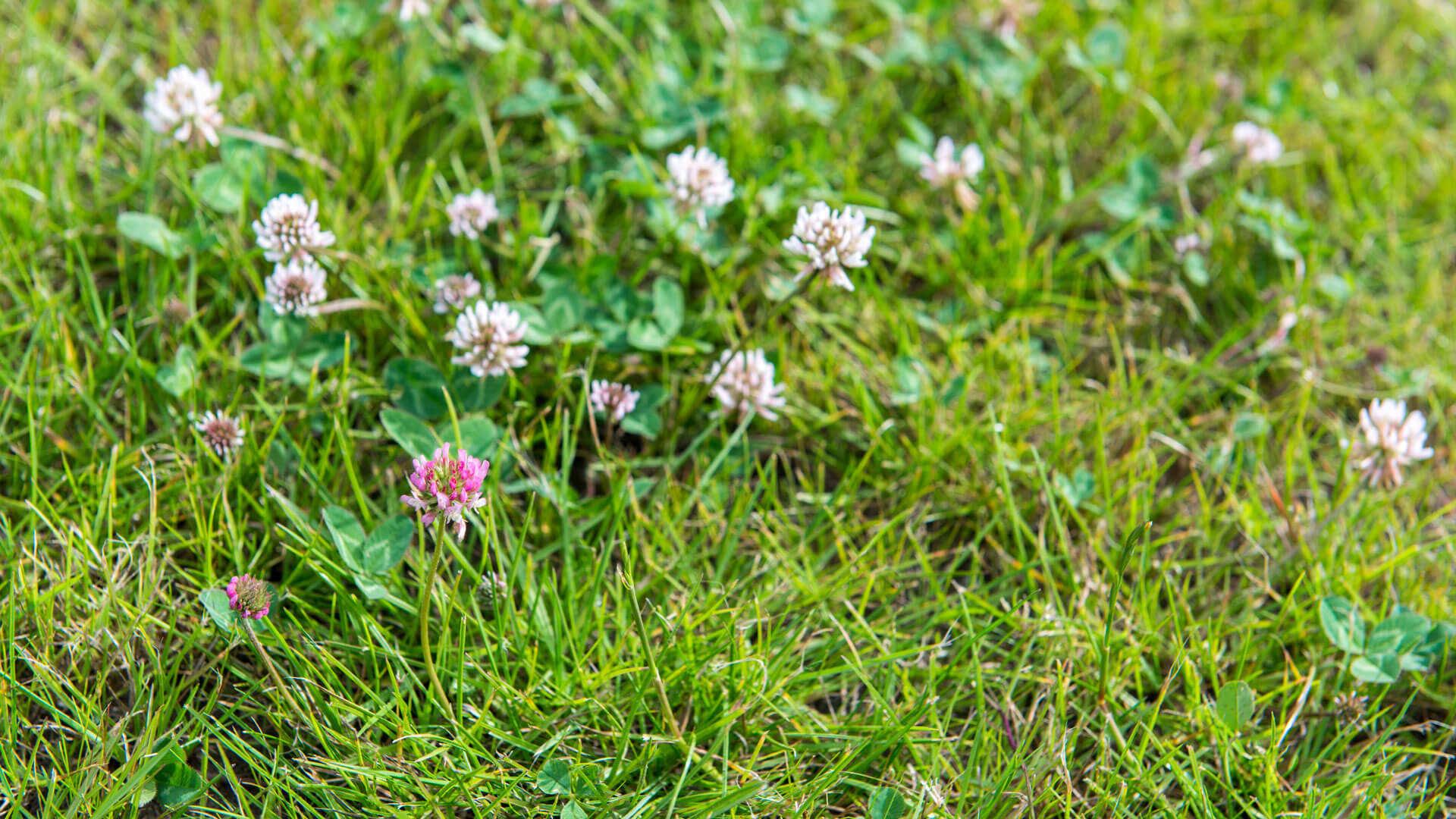 Gelbe Flecken Und Kahle Stellen Im Rasen Reparieren Cuxin Dcm