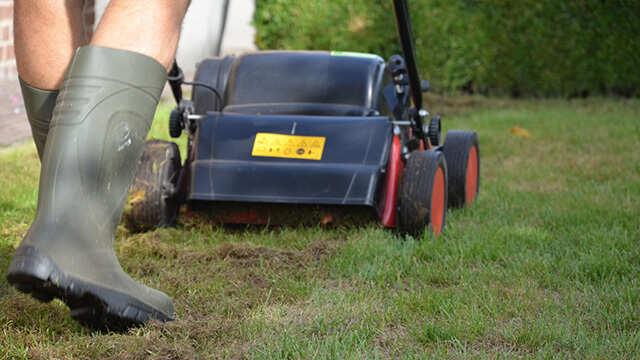 Comment faire reverdir ma pelouse rapidement en début d'année ou après une scarification?