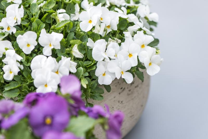 Profitez d'une terrasse fleurie pendant tout l'hiver