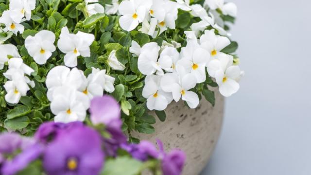 Geniet de hele winter lang van bloemen op je terras