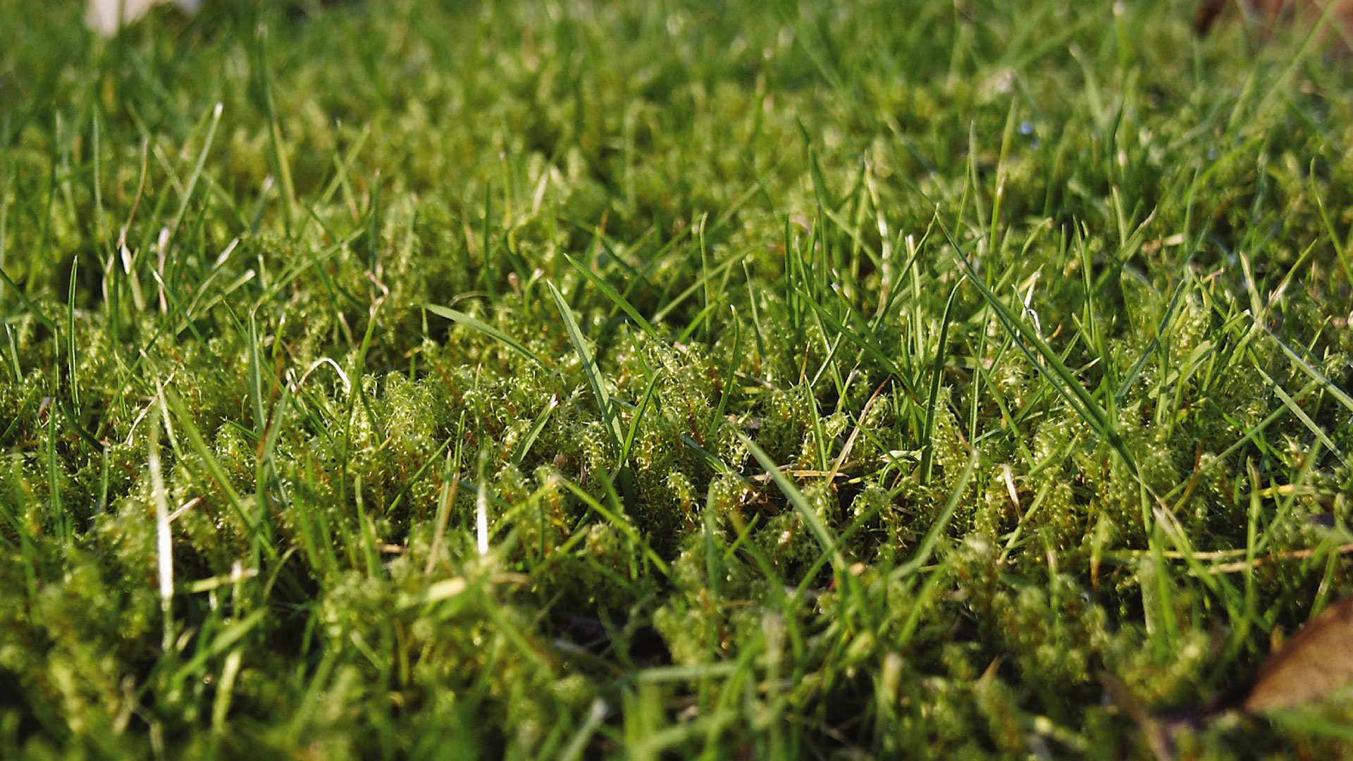 Wilt u ook een groen gazon zonder mos?