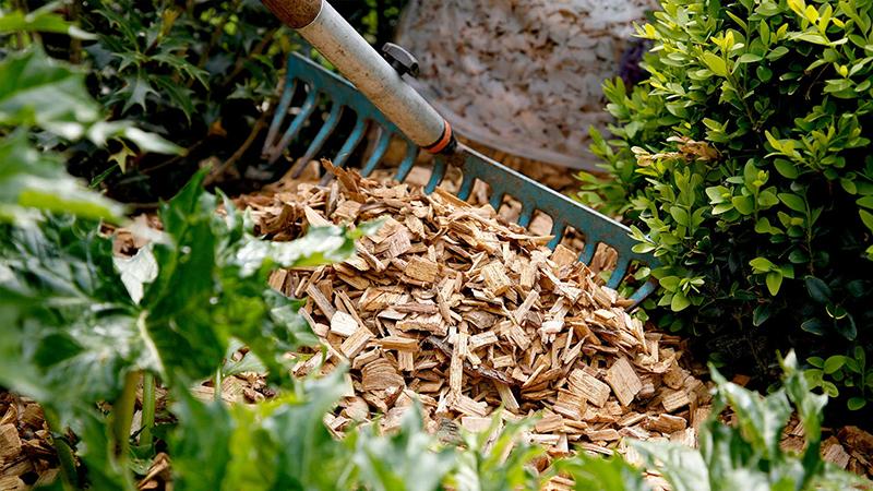 Houtsnippers of boomschors? Kies de beste bodembedekker tegen onkruid tussen je planten