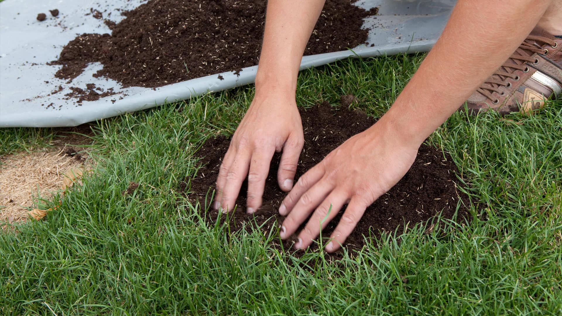 Adieu aux zones clairsemées dans votre pelouse