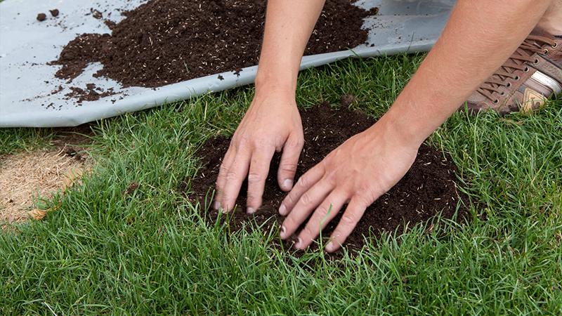 Réparez rapidement et durablement les zones dégarnies dans votre gazon