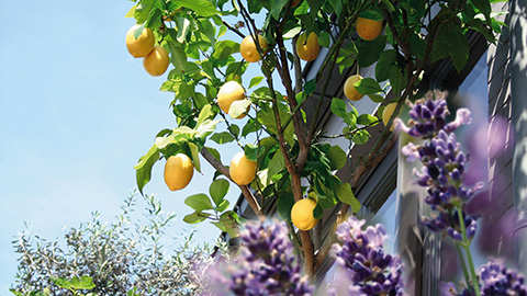 De beste basis voor uw zuiderse planten!