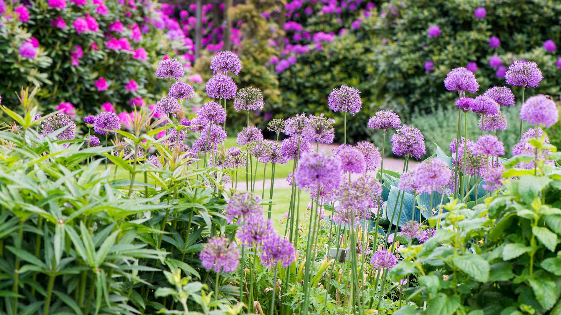 Professionele tuinen zijn trotse gebruikers van DCM meststoffen