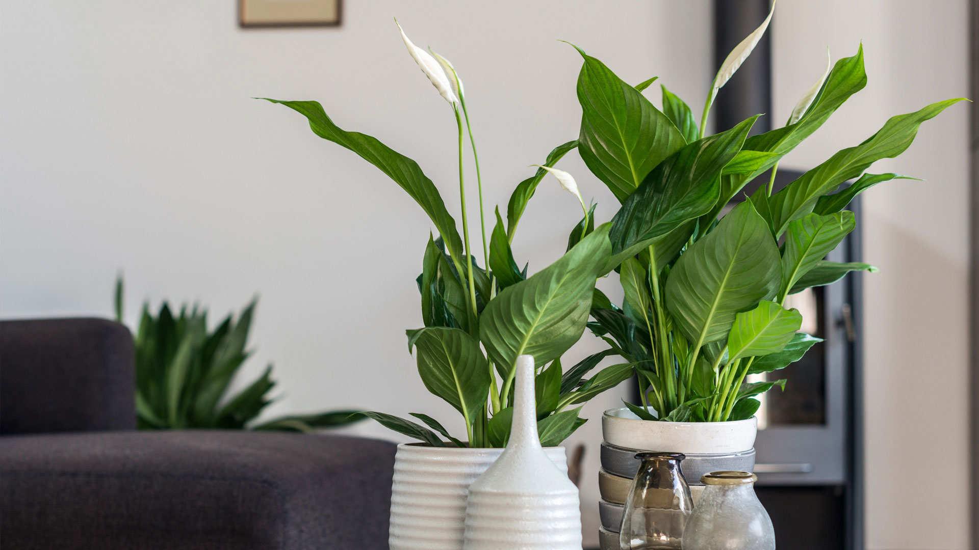 Vos Plantes D 39 Int Rieur En Pleine Forme Dcm