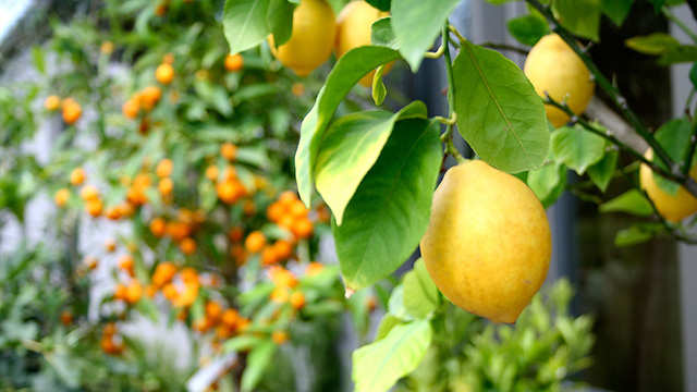 Des plantes méditerranéennes sur votre terrasse? Très à la mode et très simple!
