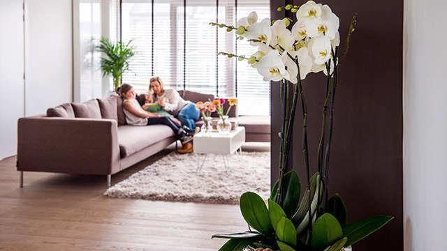 Une profusion d'orchidées dans votre appartement grâce à DCM!