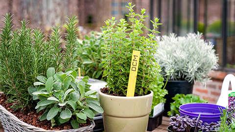 Des herbes aromatiques et des légumes frais sur votre terrasse!