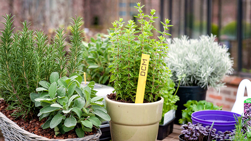 Kruiden en groenten kweken op je terras