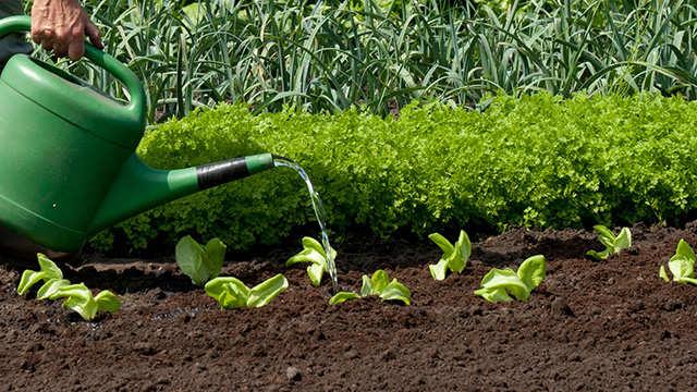 Comment assurer des récoltes de légumes optimales?