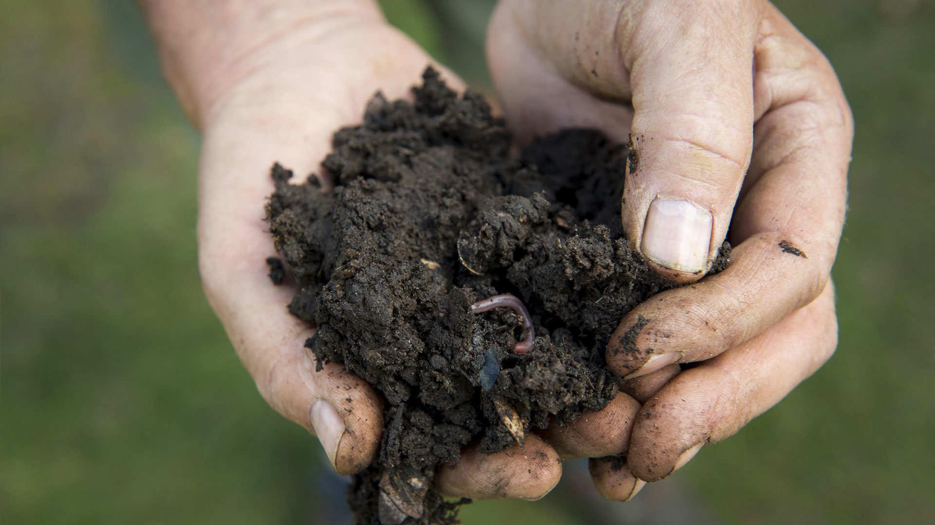 Chaque plante a son type de sol préféré