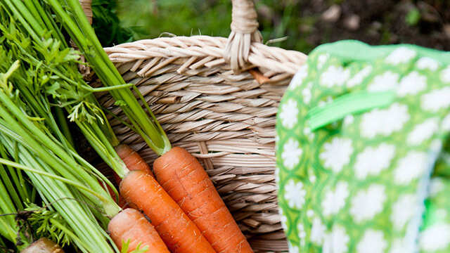 Mes légumes sont-ils vraiment BIO ?