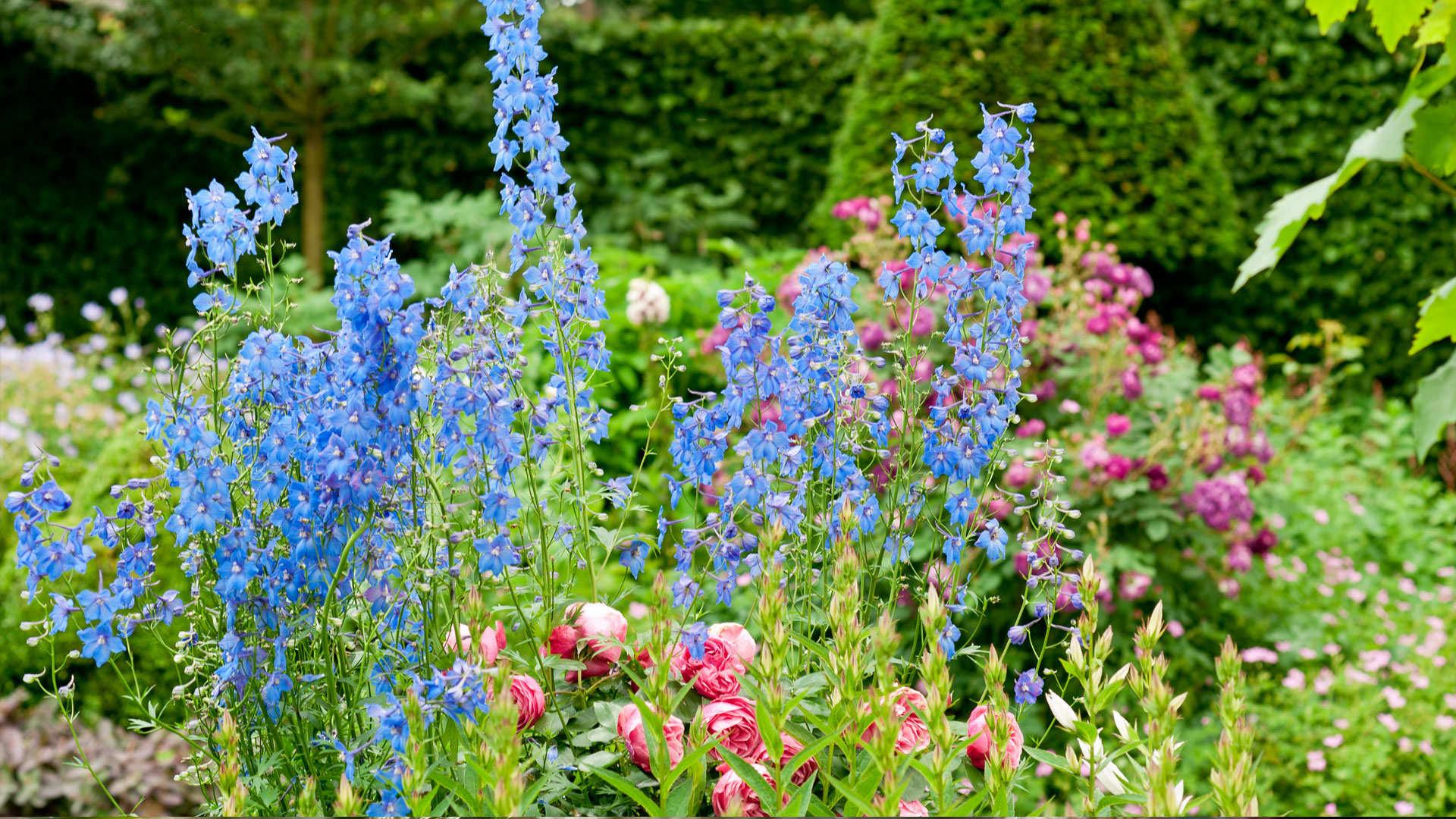 L entretien d un massif de plantes vivaces dcm for Plante de jardin vivace