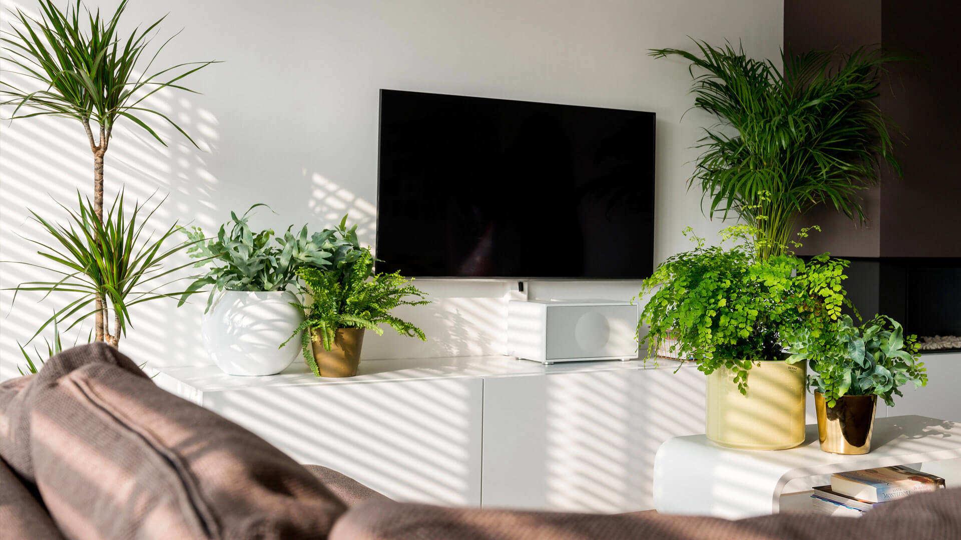 Profitez de vos plantes d'appartement durant de longues années