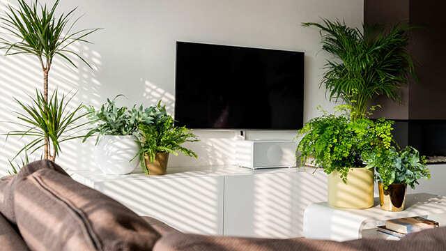 Jarenlang plezier van uw kamerplanten