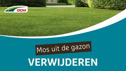 Mos in het gazon bestrijden - DCM Anti-mos