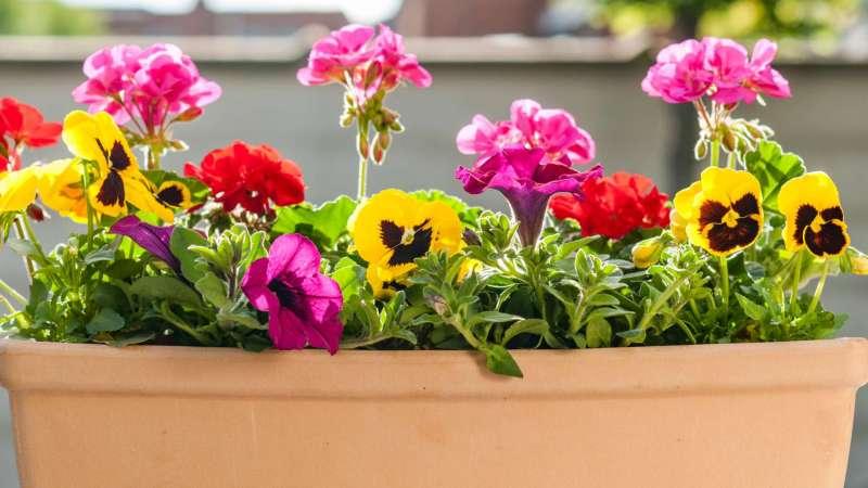 Balkonkästen richtig bepflanzen