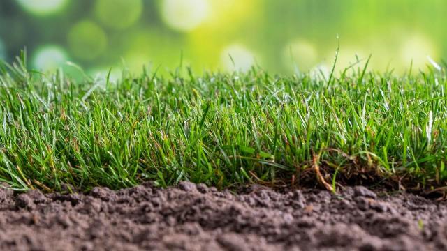 Gratis grondtest - Laat je grond testen