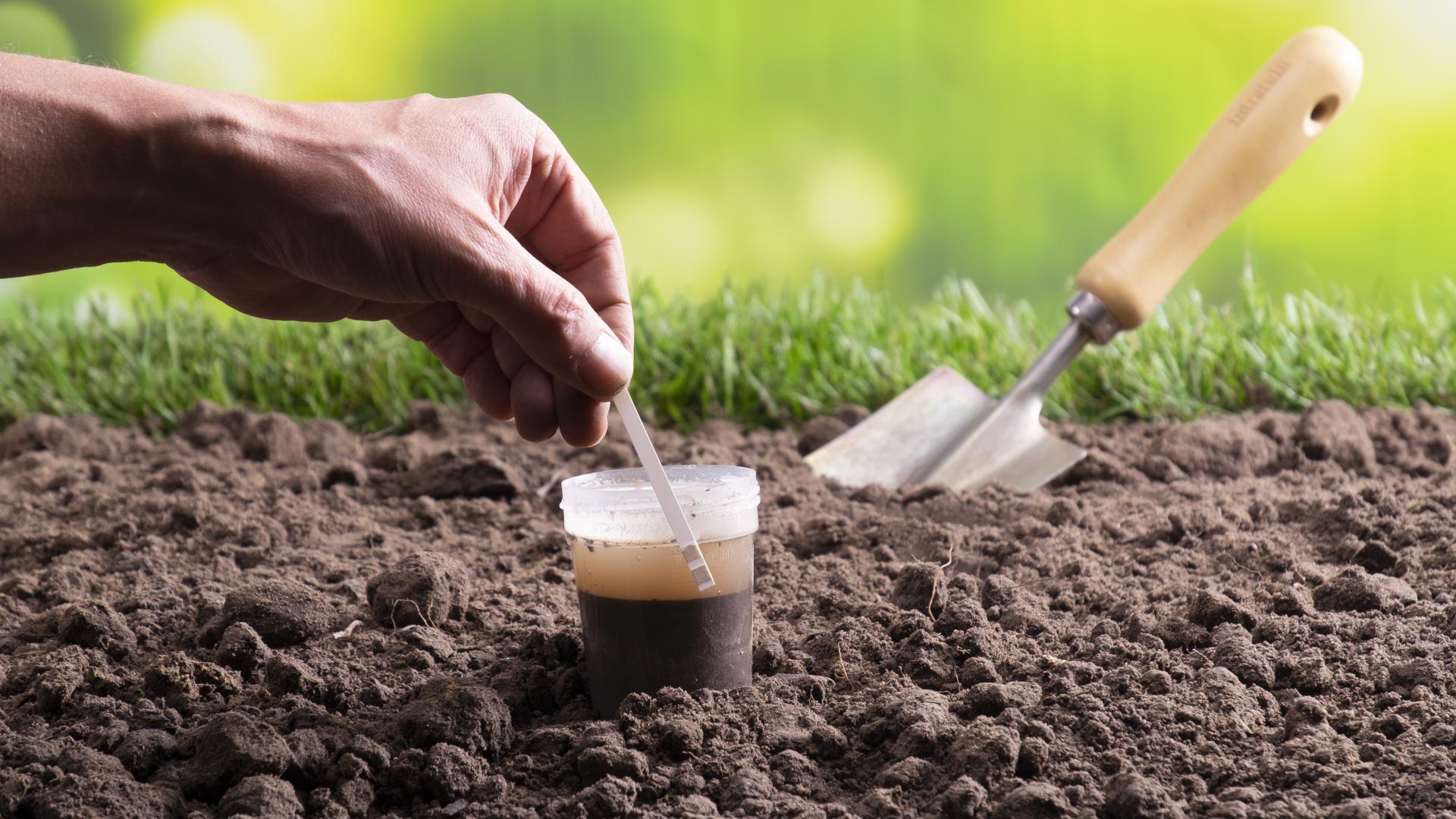 Bodenanalyse: Mit Bodenproben zum perfekten Garten