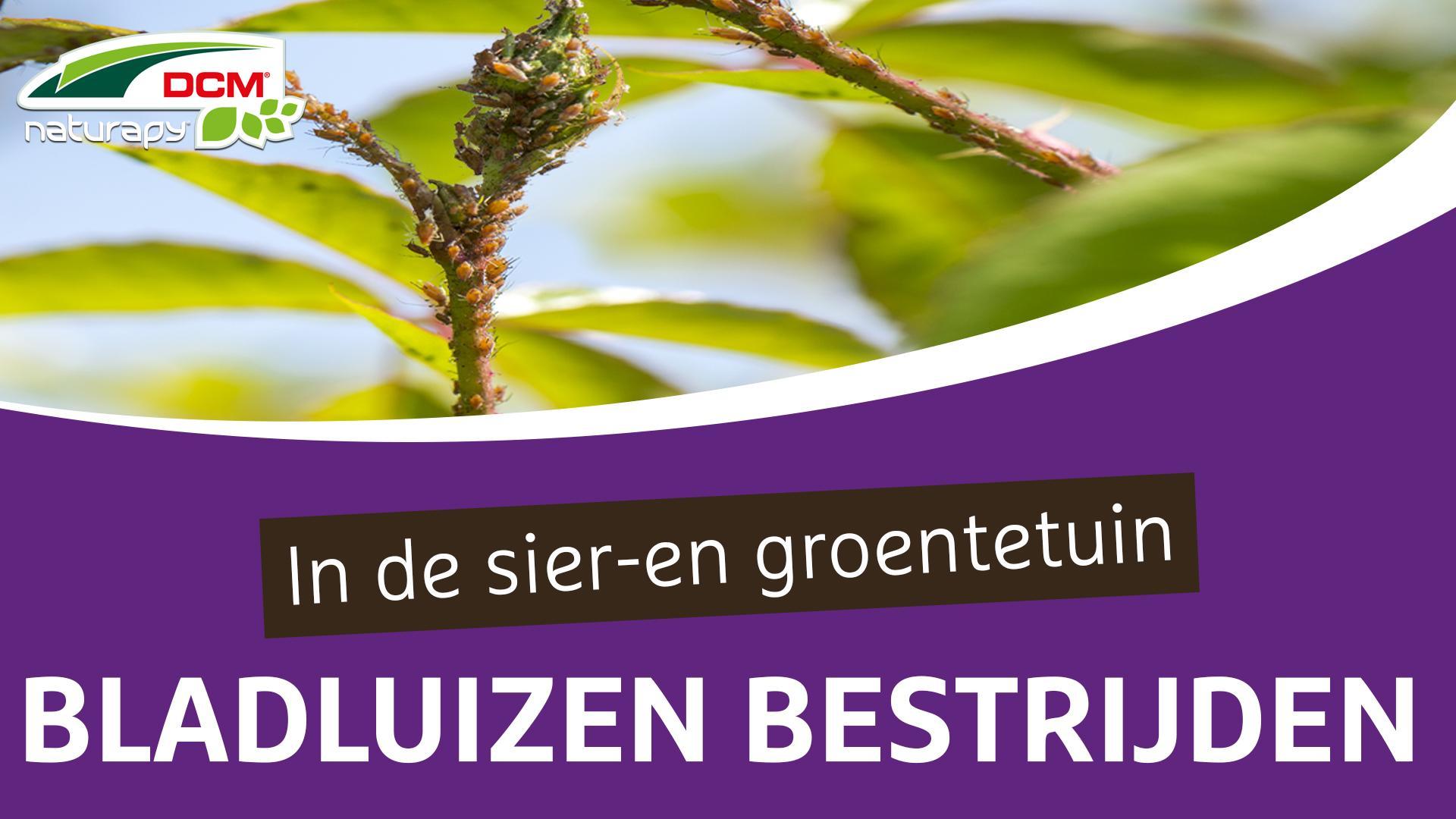 Bestrijden van bladluizen in de sier- en groentetuin - DCM Adali-Guard®