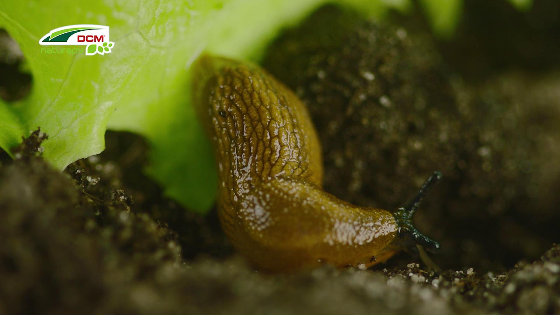 Slakken biologisch bestrijden