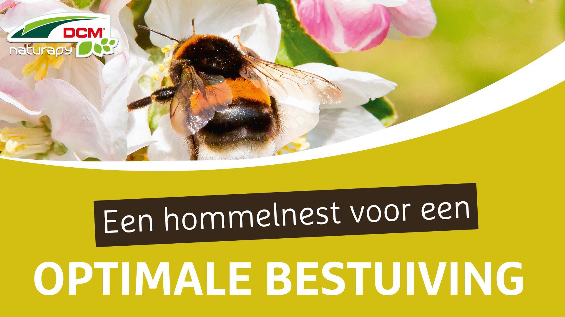 Een hommelnest voor een optimale bestuiving in uw tuin - DCM Bumblebee Nest