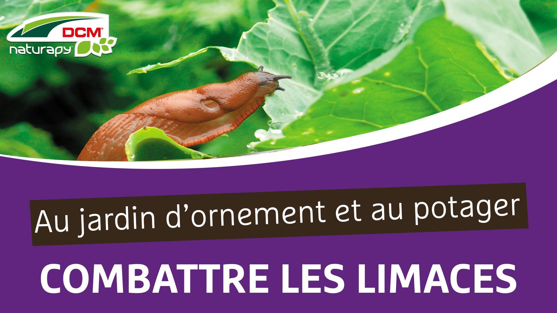 Combattre les limaces au jardin d'ornement et au potager - DCM Phasmi-Guard®