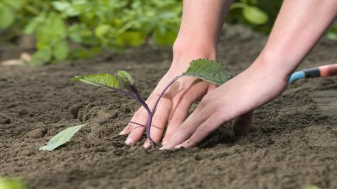 So gelingt der Gemüse-Anbau