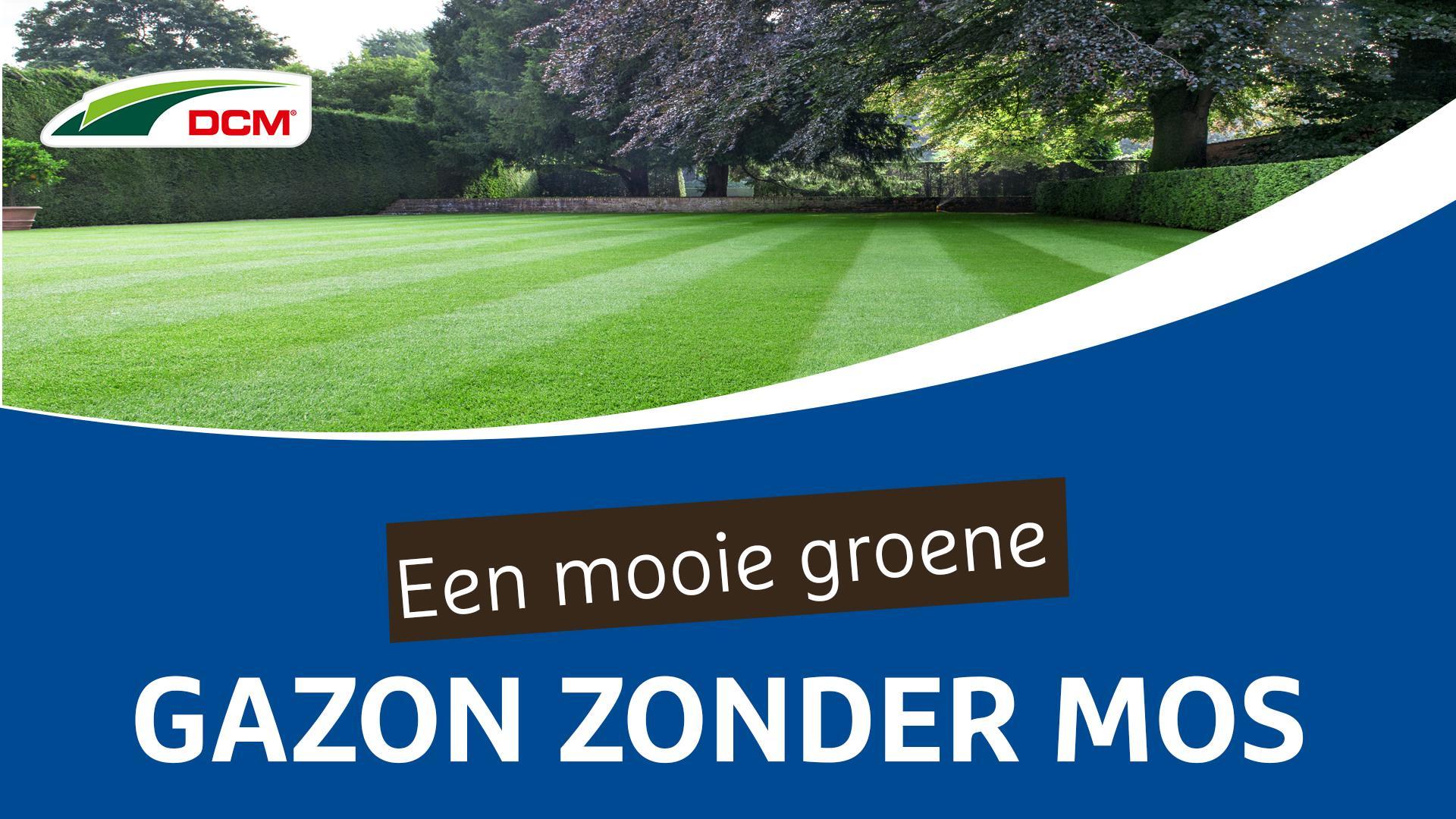 Een mooi groene gazon zonder mos - DCM Gazon Pur®