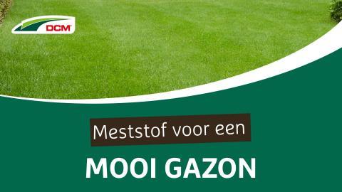 Meststof voor een mooi gazon - DCM Organische Gazonmeststof