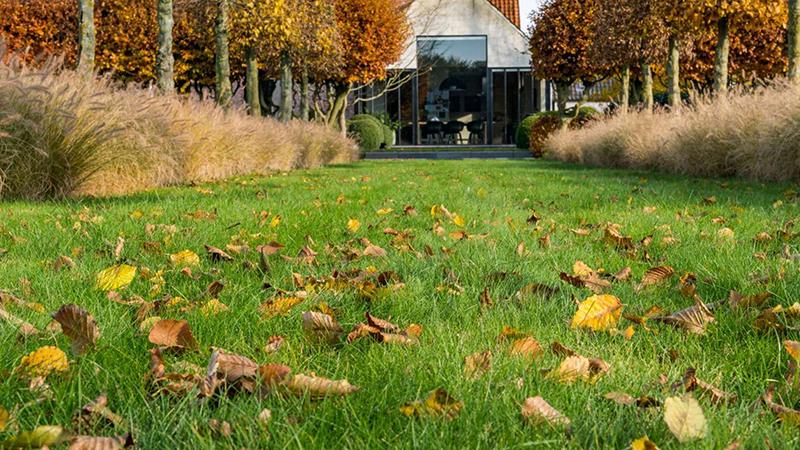 Herbst Wellness für den Rasen