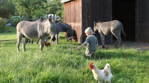 Puur plantaardig weidegras voor geiten, schapen, konijnen en meer dieren